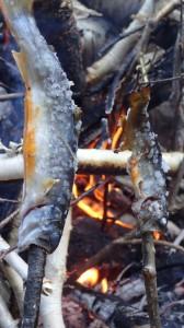 小さいの3匹、中が1匹釣れました。タップリ粗塩まぶして美味しく頂きました~♪