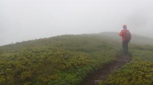 下山は夏道から。ドロドロヌルヌルで沢靴には厳しい下山でした。悲鳴上げすぎて喉が痛かった